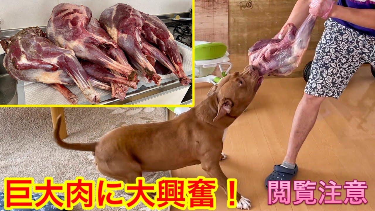 【巨大肉祭り】過去一ヤバすぎる肉が送られました!!冷凍庫が悲鳴上げてますw