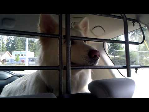"Talking Dog says ""I don't want to go"" to the vet!"