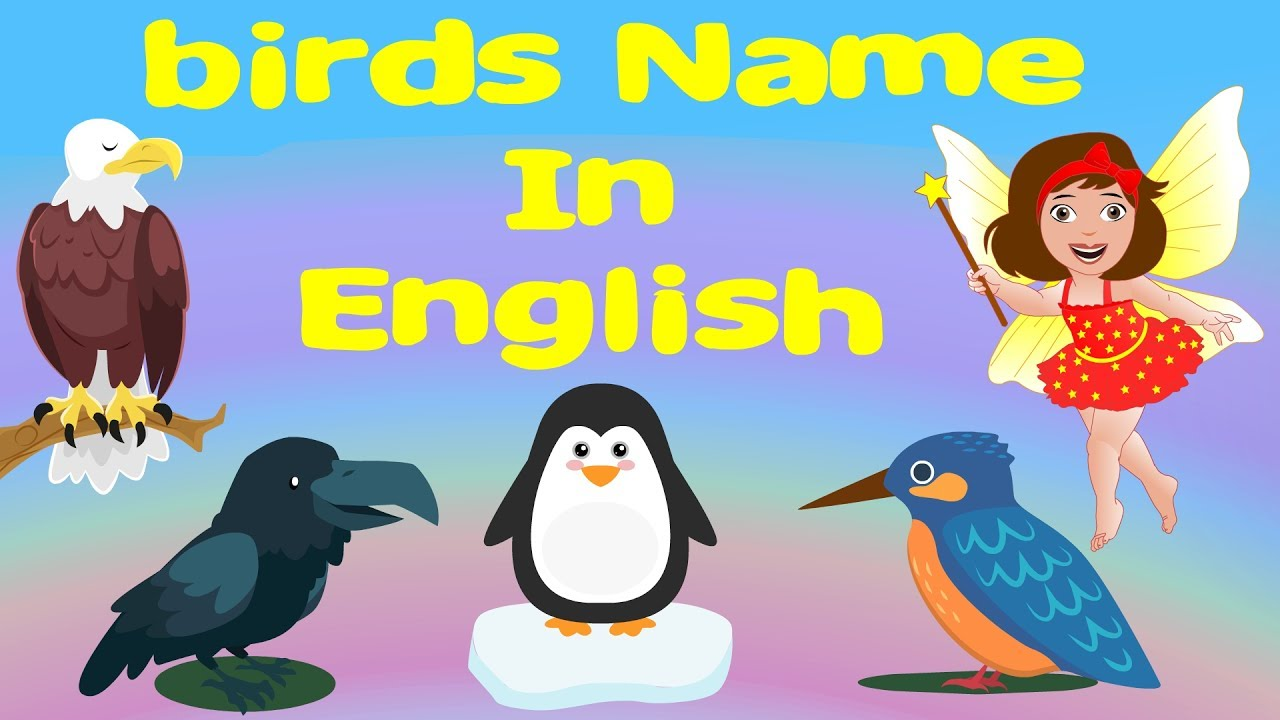 Birds Name In English With Images For Nursery Cl