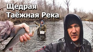 Жор крупного хариуса Рыбалка на горной таёжной реке Вот это рыбалка клёв как из бочки