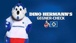 Dino Hermann's Gegner-Check | 1. FC Köln | #KOEHSV