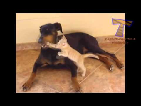Top 5 Cat and Dog Funny Fight Compilation 2014