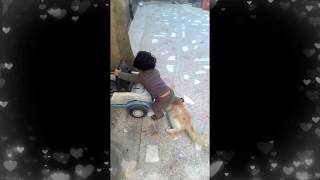Baby Playing with Cat - Persian Cats