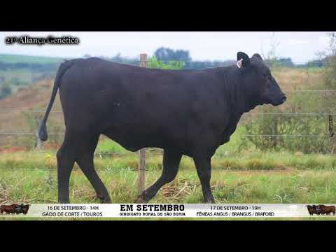 LOTE 084