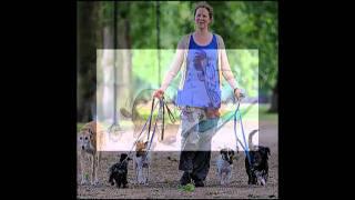 Alpha Dog Training School