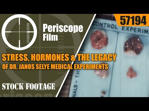 STRESS, HORMONES & THE LEGACY OF DR. JANOS SELYE  MEDICAL EXPERIMENTS ON MICE & RATS FILM   57194