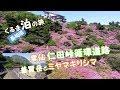 くるま泊の旅・島原雲仙仁田峠のドライブ普賢岳とミヤマキリシマの眺望・長崎県・車中泊