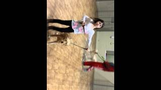 Emma At Obedience School