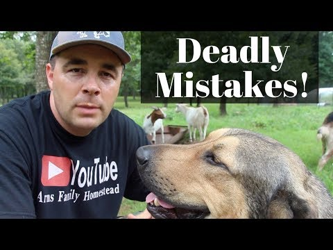 Top 3 DEADLIEST Mistakes New Goat Owners Make