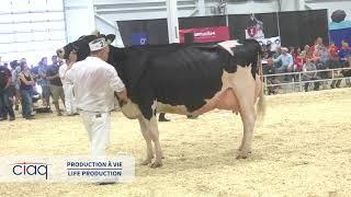 Suprême Laitier 2018 : Production à vie 60 000 kg et plus  - Holstein