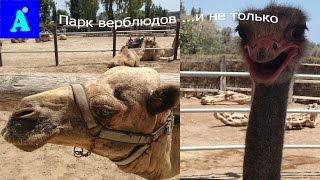 VLOG/Мазотас/Парк верблюдов и развлечений/(Всем Привет!!Наше путешествие на Кипр начинается!!Путешествуйте с нами!!Мы рады каждому из Вас! Всем Привет!..., 2016-08-29T09:07:30.000Z)
