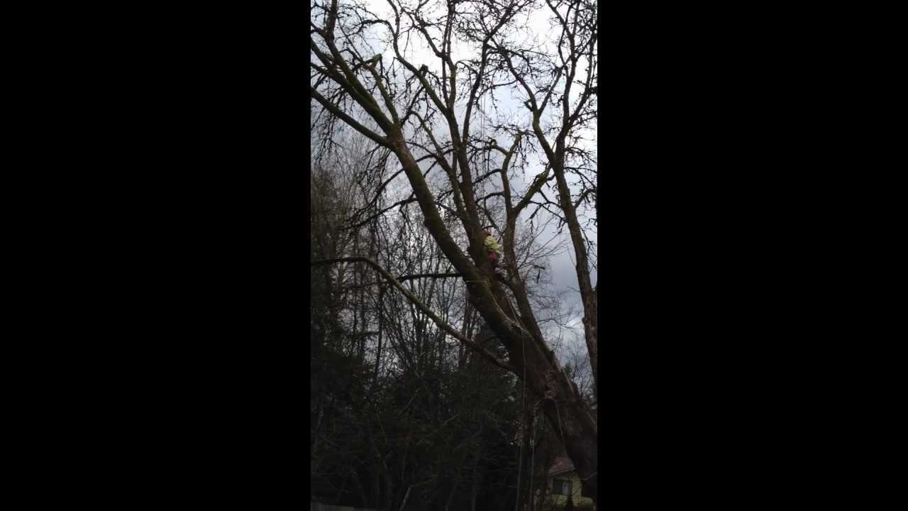 Tree Removal Portland Or J And F Service