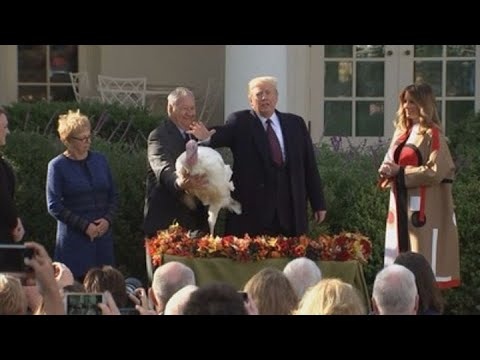 President Trump pardons Thanksgiving turkeys