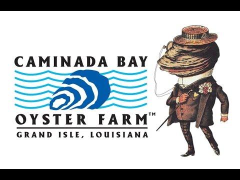 Caminada Bay Oysters