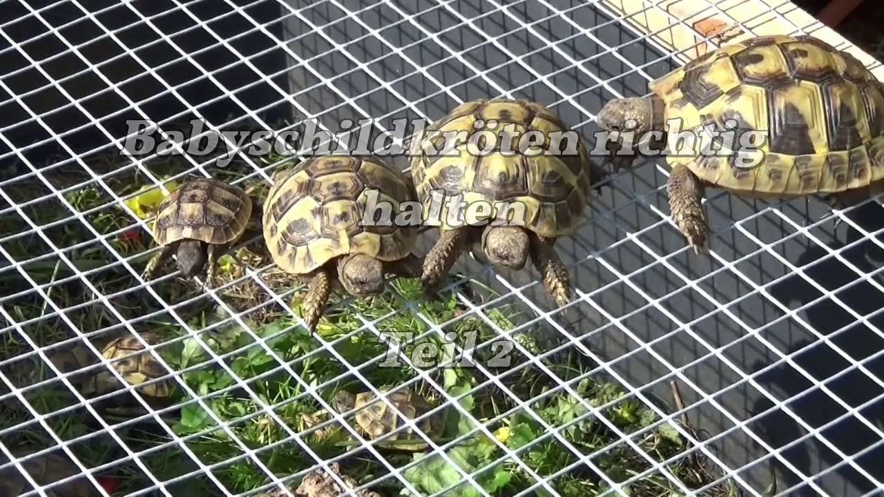 Mini Kühlschrank Für Schildkröten : Babyschildkröten richtig halten teil winterruhe youtube