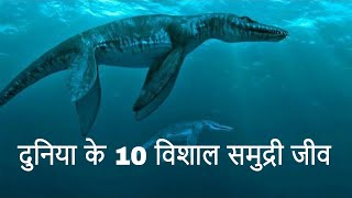 Top 10 Giant Sea Creatures in the World