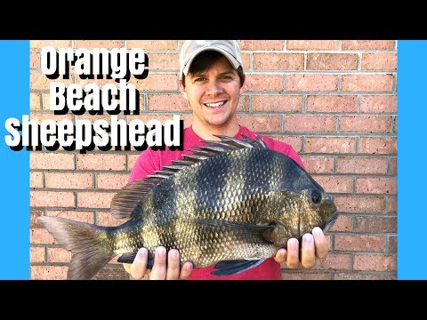 Jetty Fishing For Sheepshead In Orange Beach AL  - Perdido Pass Fishing