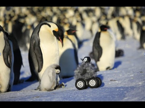 Tourism in Antarctica - Geography Case Study