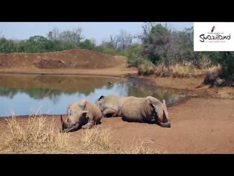 Travel Guide Safari Etiquette 101 Swaziland