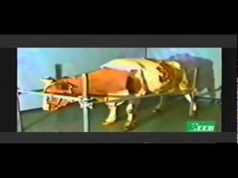 BSE EEB Vaca  Louca.DAT