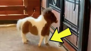 Rescue Ranch Saves A Suffering Mini Horse Before Discovering Her Strange Intentions