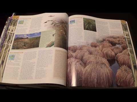 ASMR - Page turning - #42 - Plants book - no talking