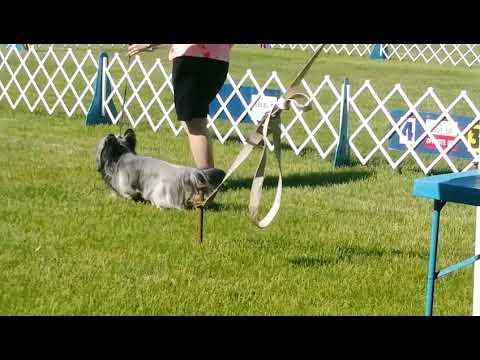 5.26.18 Key City KC - Skye Terrier - Open Dog/WD