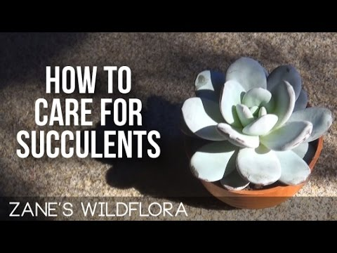 How to take care of succulents with how to take care of for How do you take care of succulents