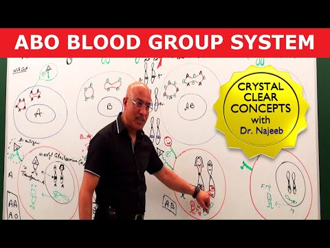ABO Blood Group System - Blood Types & ABO Antigens
