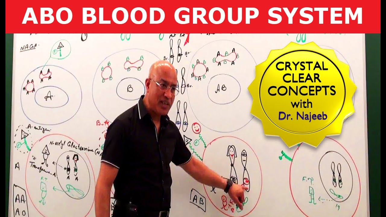 ABO Blood Group System - Blood Types & ABO Antigens