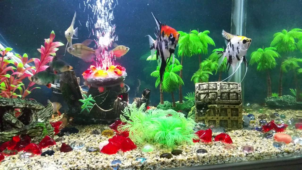 Fish tank decoration youtube for How to decorate fish tank