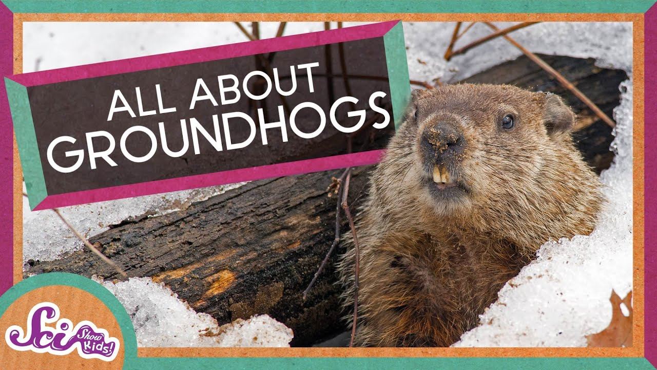 fun facts about groundhogs youtube