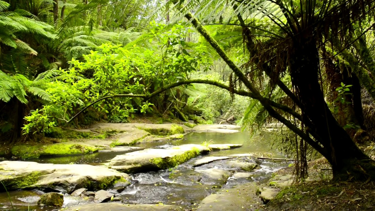 Forest Nature Sounds Australia - Jungle Sounds With ...