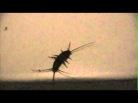 Silverfish In Bathroom