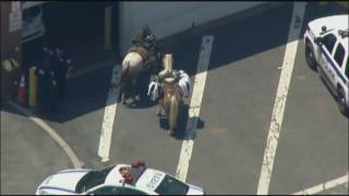 Man and 2 horses stopped on busy NYC bridge