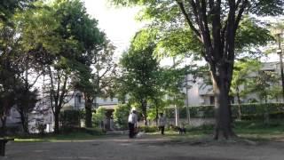 公園でわんちゃんが喧嘩してましたw この動画を撮る前はもっと激しかっ...