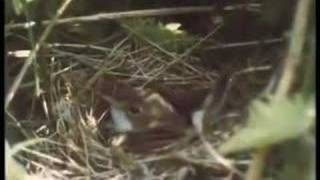 Video Birds of Britain download MP3, 3GP, MP4, WEBM, AVI, FLV Desember 2017