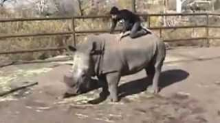 Men having sex with rhino at the zoo