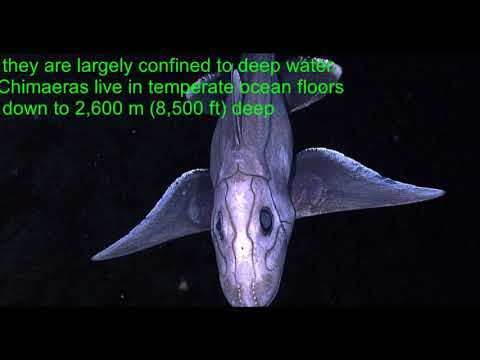 11 Deep Sea Creatures Of Mariana Trench