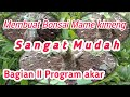 tahapan membuat bonsai mame dari bahan stekan beringin kimeng 2