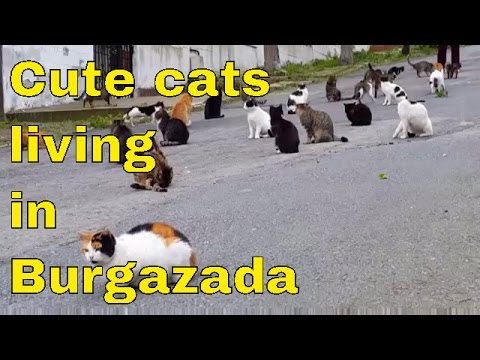 Funny Cats│Cute cats living in Burgazada │Istanbul