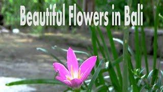 XXX-BaliFlower2 Bali Flowers