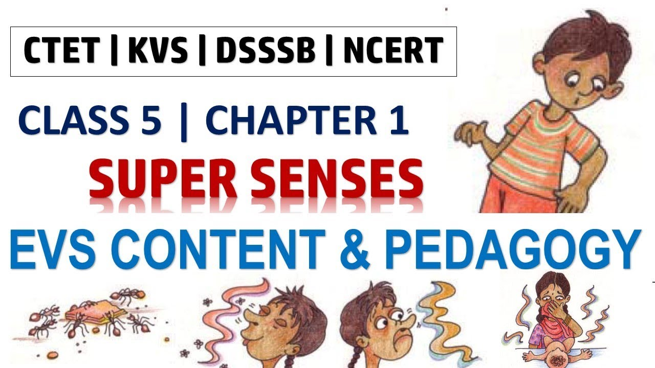 EVS Content and Pedagogy for Class 5 Chapter 1 | Super Senses | CTET KVS  DSSSB