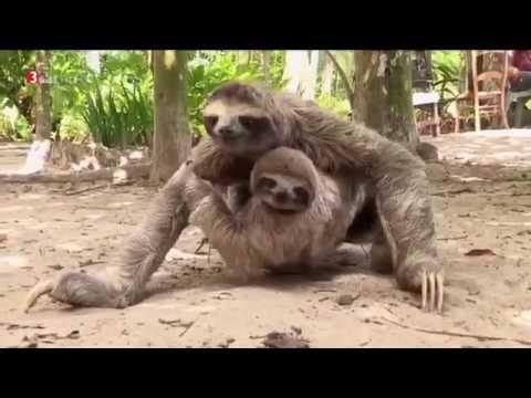Doku Reisezeit Traumhafte Ziele Costa Rica HD Deutsch