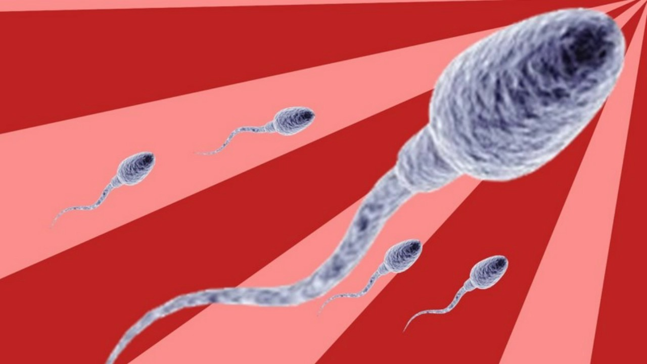 how-long-is-sperm-alive