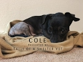 Cole - Tails of a Shelter Vet