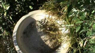 How To Fill Up a Bird Bath