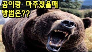 곰 습격에서 살아나는 방법 TOP5