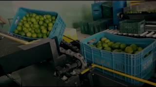 Máquina Beneficiar Limão - Classificadora de Limão - Lavadora de Limão - Cronos