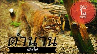 🔴สาบไพร : ตำนานเสือไฟ